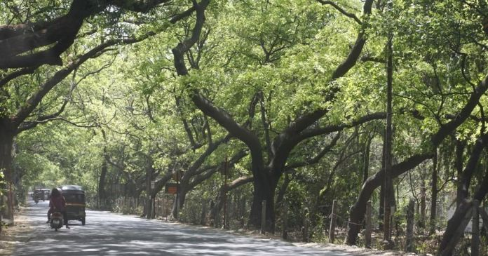 SC grants permission to construct Metro shed in Aarey coony
