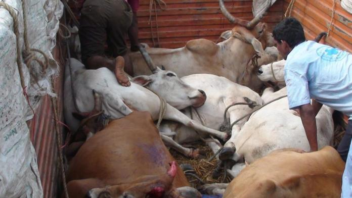 Cow Smugglers fire at Rajasthan police on being confronted