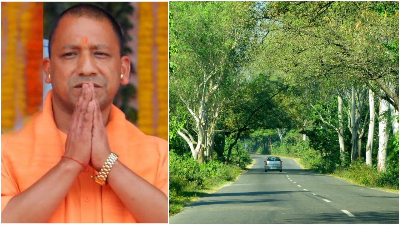 Uttar Pradesh govt to develop 800 km of Herbal Belt along highways