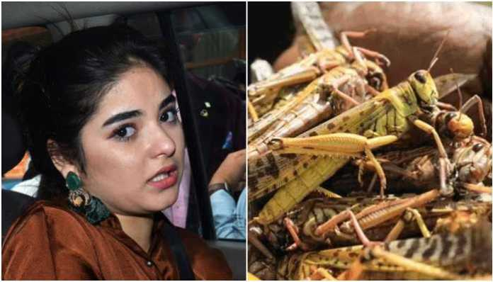 Zaira Wasim quotes Quran to insinuate that locust attack in Rajasthan, MP is 'Allah's wrath' on 'arrogant people'