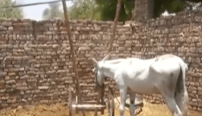 Donkey 'arrested' in Pakistan along with 8 men for gambling race