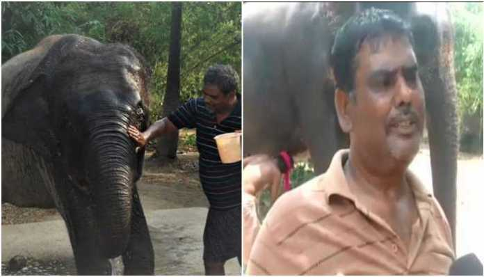 Bihar man says his son is trying to kill him, nominates his pet elephants as legal heirs