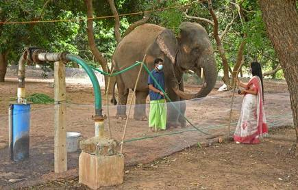 Lakshmi the Elephant was taken away from her home at the Manakula Vinayagar Temple in Puducherry