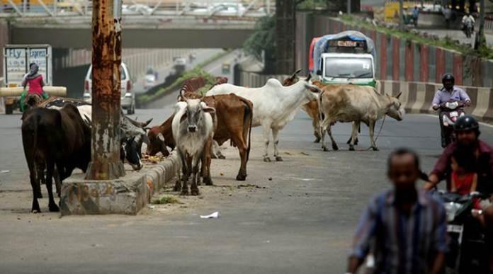 Chhattisgarh: 40 cows suffocate to death in Bilaspur, 20 rescued