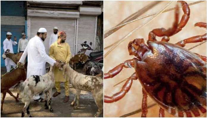 Pakistan's NIH issues CCHF advisory ahead of Eid, says tick-borne viral disease can be deadly