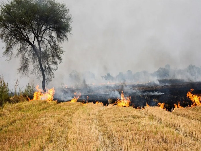 Stubble burning continues non-stop in Punjab, 240% rise in cases this year