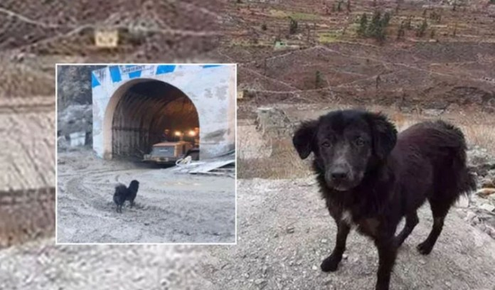 A black dog of Bhotia breed named Blackie has been waiting for his lost caretaker near the Tapovan tunnel.