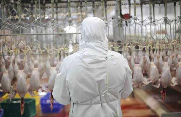 France: Outrage over alleged 'halal meat' ban in France
