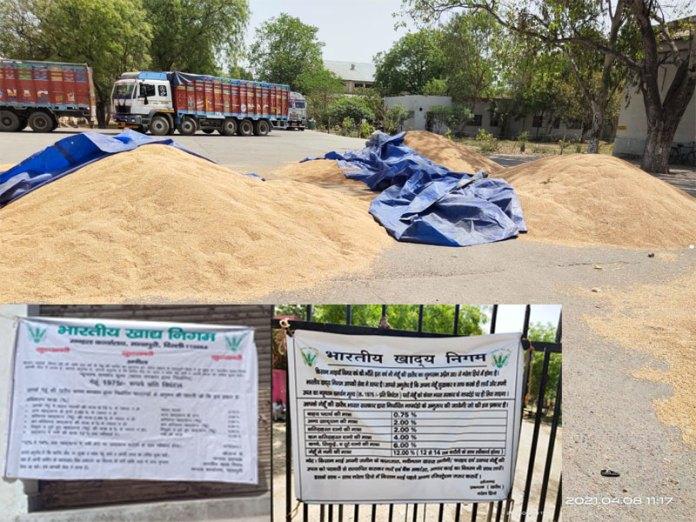 FCI Delhi Region shared images of wheat procurement