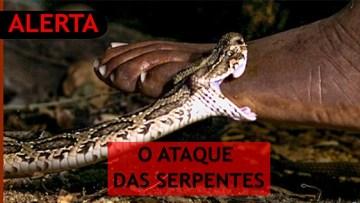 miniatura cobra site