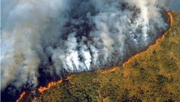 Screenshot_2020-08-24-Macron-convoca-G7-para-discutir-incêndios-na-Amazônia-Notícias-Curitiba-Jornale-1