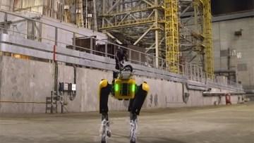 cao-robo-1
