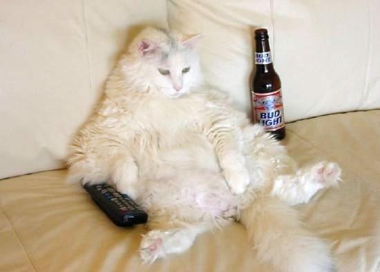 chat bière