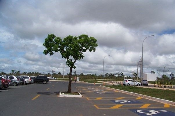 arbre sur la voie
