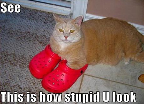 cat-look-stupid-crocs