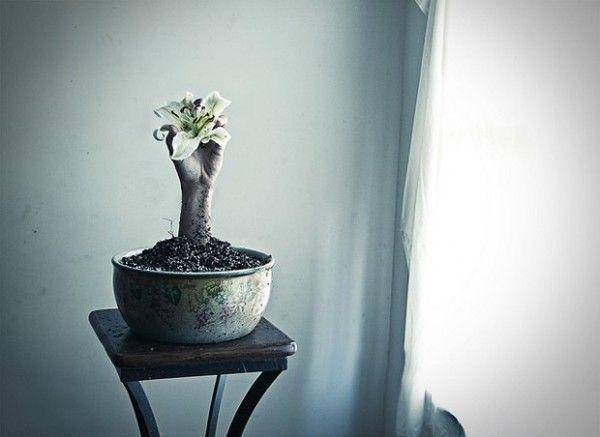 la plante de la souffrance