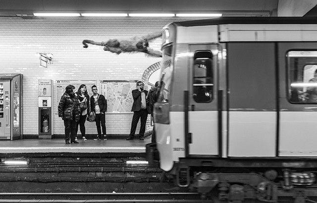 singe-métro