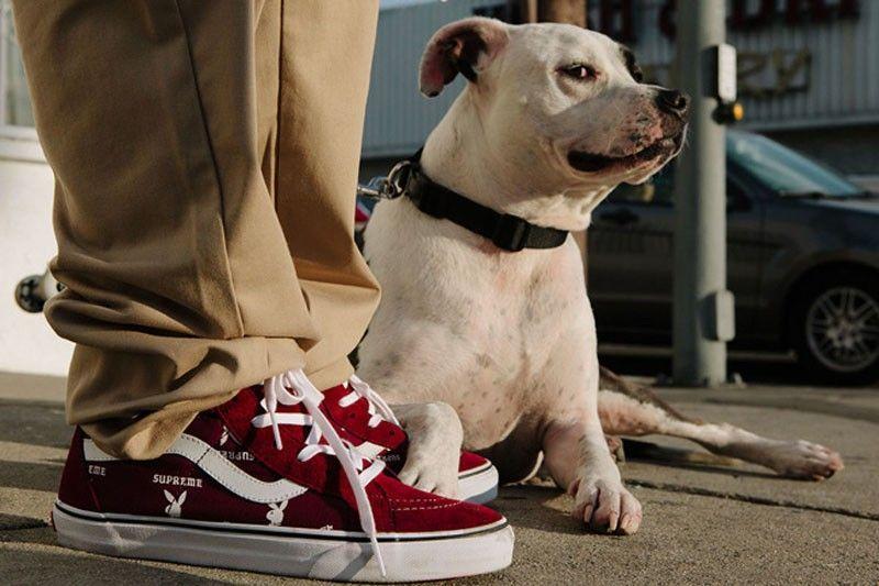 vans-supreme-playboy-dog