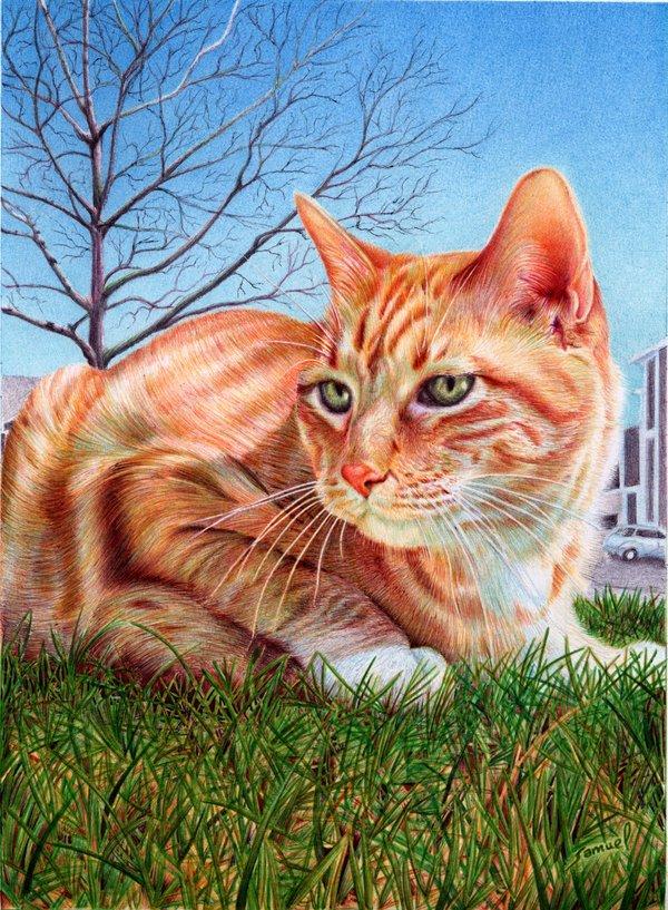 ginger_cat