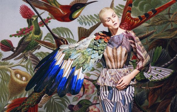 Masha reva oiseau