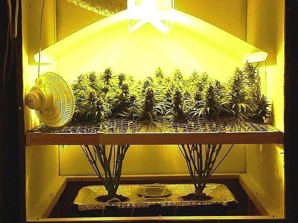 petite-production-cannabis