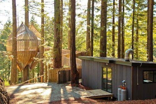 restaurant Redwoods Treehouse