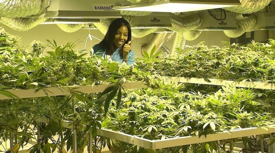 reporter de weed
