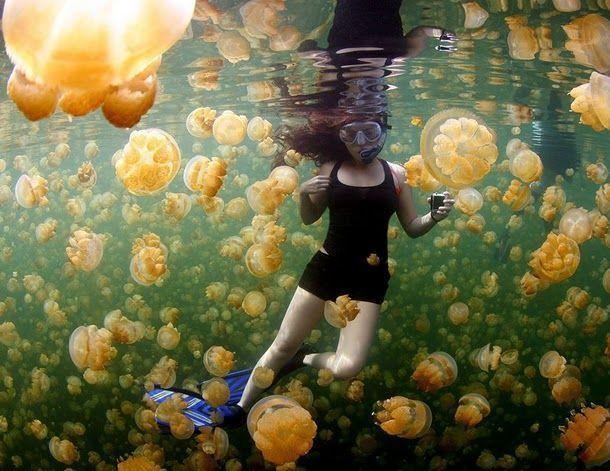 lac méduses