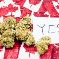 cannabis-couv