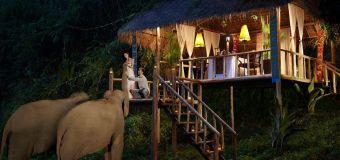 Dormir confortablement dans le milieu naturel des éléphants, ça te dit ?