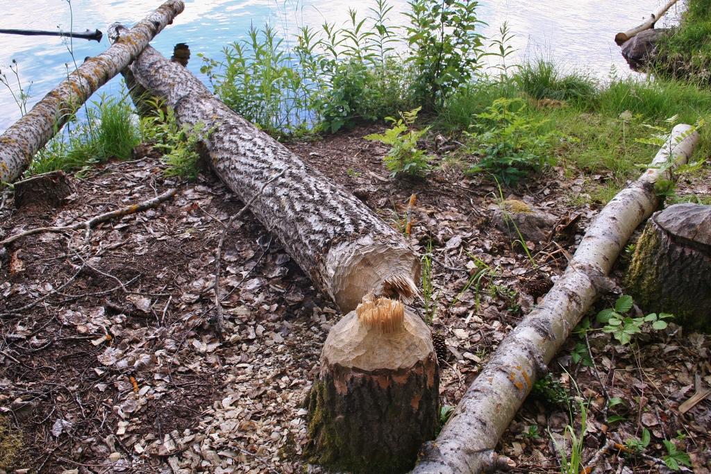 Hälsingland: diep in het grote bos......