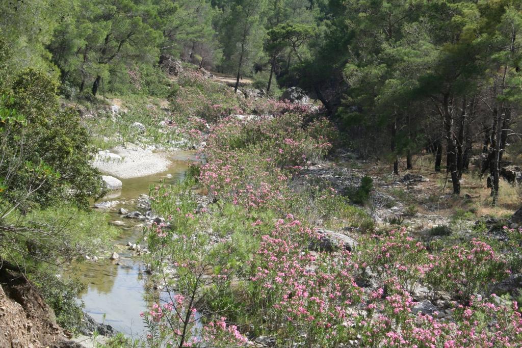 Koutari river