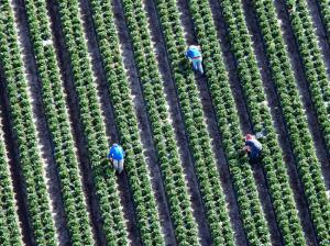 foto dos berries