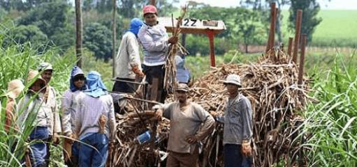 Foto: Imagen agropecuaria. . El Potrero y San Miguelito tienen 3.9% del mercado nacional de azúcar
