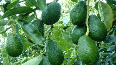 Photo of EEUU reduciría la lista de protección especial a 61 productos agrícolas en el TLCAN