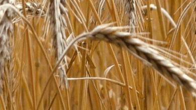 Photo of ¿Cuáles son los incentivos para la comercialización agropecuaria en México?
