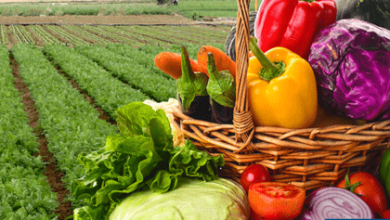 Photo of La Cofoce promueve exportaciones de alimentos de Guanajuato a Guatemala