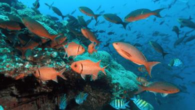 Photo of La capacidad mundial de la pesca aumentó 50% desde 2001; la sobrepesca ha empeorado