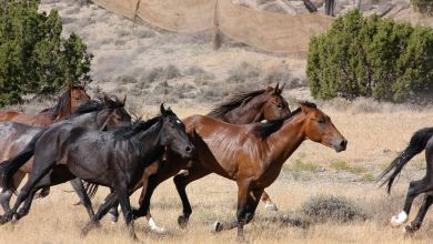 Photo of México registró importaciones de 57,984 caballos