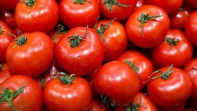 Photo of Exportadores de tomate de México recurren a Corte de EU
