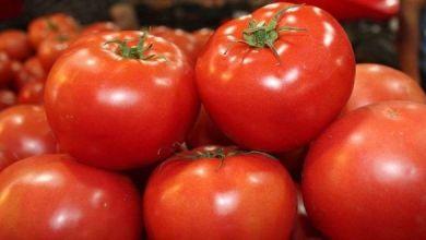 Photo of Podría hoy haber acuerdo sobre exportaciones de tomates