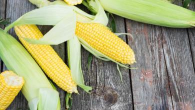 México aumentaría sus importaciones de maíz a pesar de una mayor producción.
