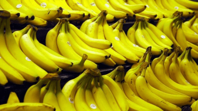 Photo of Ecuador rompe récord en sus exportaciones de banano