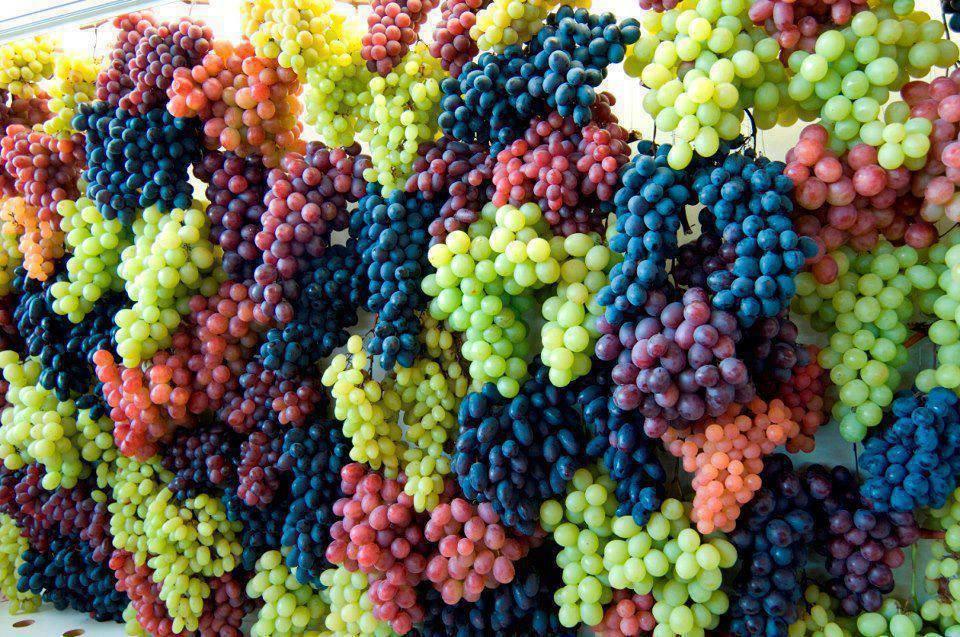 Las exportaciones mexicanas de uvas frescas a Estados Unidos totalizaron 601 millones de dólares, un alza de 43% interanual.