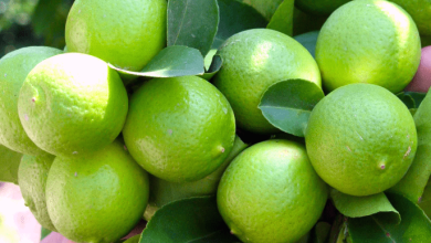 Photo of Los 10 mayores exportadores de limones del mundo