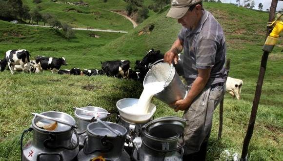 Milk production in Mexico totaled 8.250 million liters from January to August, 2.23% higher than that registered in the same period last year, reported the Ministry of Agriculture.