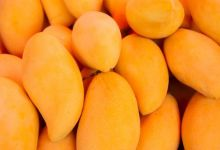 Photo of Exportaciones de mango de México suben 4.5%