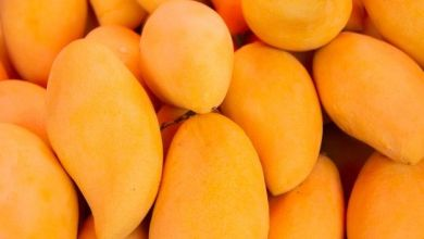 Mango exports from Mexico to the world reached a growth of 4.5% year-on-year from January to October 2020, to 325.7 million dollars.