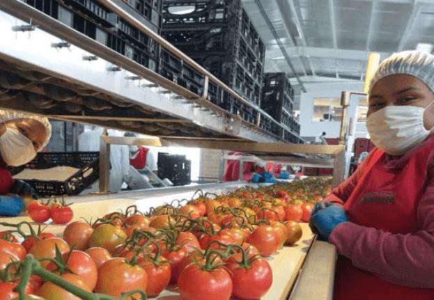 SE crea Comité Nacional de Facilitación del Comercio | Opportimes