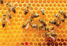 Estados Unidos lideró las importaciones mundiales de miel natural en 2020, con compras externas de 441 millones de dólares. The United States led the world in natural honey imports in 2020, with foreign purchases of $ 441 million.